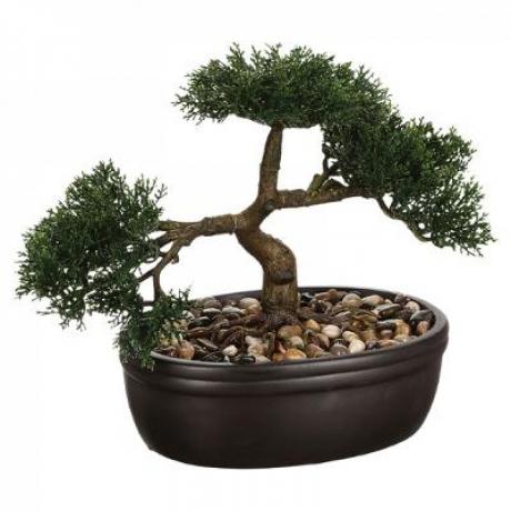 Bonsai h23