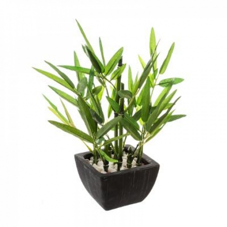 Kunsttaim potis 'Bamboo'