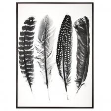 Raamitud pilt 'Feather' 60x80