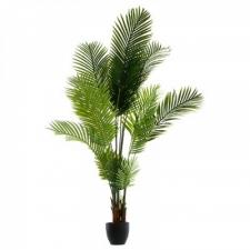 Palmipuu h170