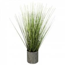 Potis murutaim 'Grass'