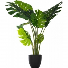 Philo Monstera h110
