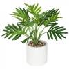 Palmipuu h29