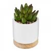 Sukulent potis 'Ceramic Wood'